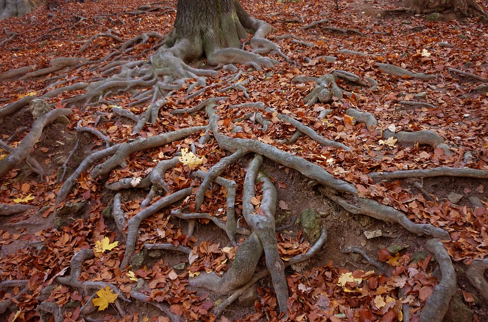 roots-900653_960_720
